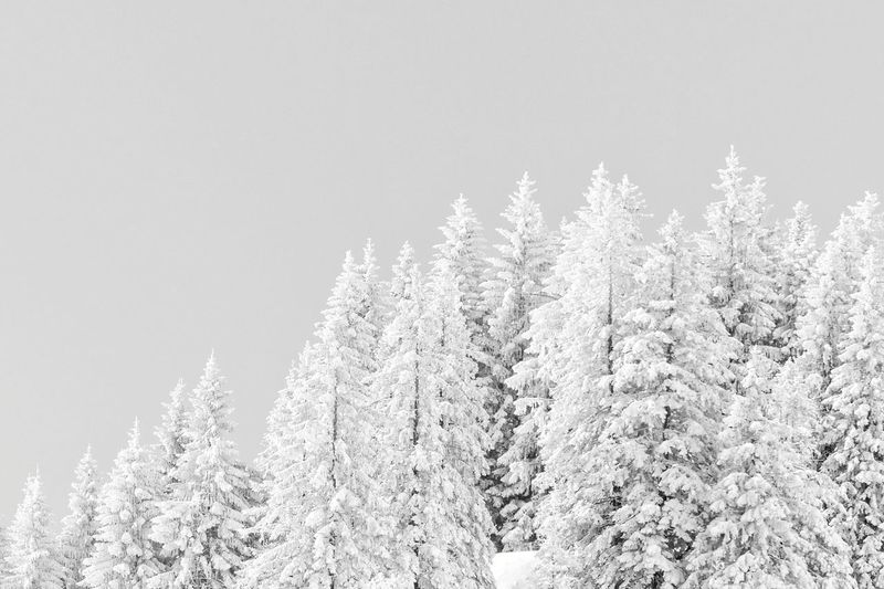 Nature Outdoors Non-urban Scene No People Minimalism Black And White Black & White Backgrounds Landscape Winter Tree Snowflake Snow Cold Temperature Winter Forest Rural Scene Frozen Spruce Tree Full Frame Frost Evergreen Tree Idyllic Tree Area Treetop Detail Tranquil Scene Snowcapped