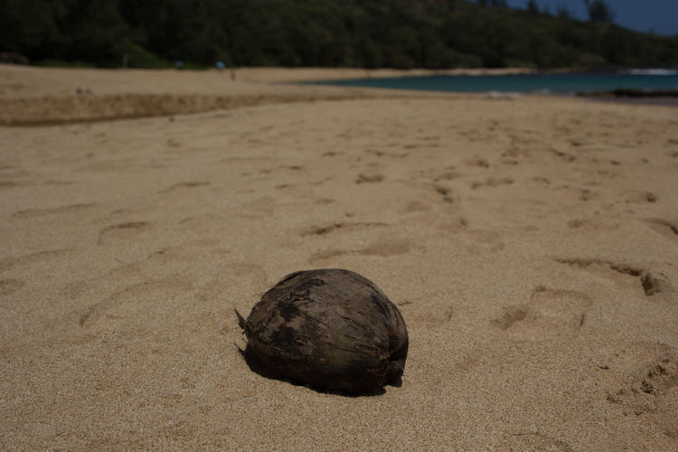 Coconut on sandy desert island beech Beach Close-up Coconut Day Focus On Foreground FootPrint Hermit Crab Nature No People Outdoors Sand Sea Shore Tranquility