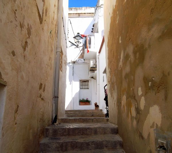 Impressions in ibiza city Cute Puppy Dog In Ibiza City At Eivissa Ibiza Impressions In Ibiza City Architecture Building Exterior Built Structure Day Full Length Indoors  Men People Real People Staircase Steps Steps And Staircases The Way Forward Walking