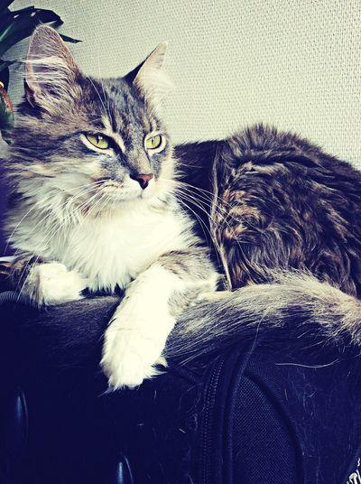 My Cat Cat Cute Cats