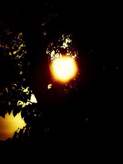 Tree Park Tree Sunset Filterphotography Fine Art Photography