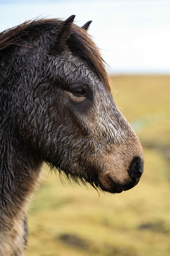 Close-up of a horse on field
