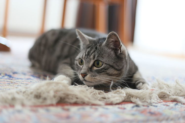 Portrait of cat sitting on rug at home