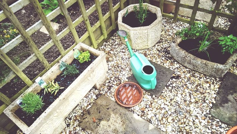 Herb garden , fresh herbs , home cooking :-) Check This Out