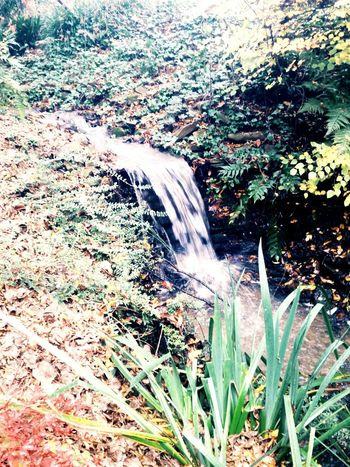 Water Waterfall Stream Garden Botanical Gardens EyeEm Nature Lover Nature Photography Beautiful Nature Fall Autumn Taking Photos Enjoying Life Water_collection Autumn Leaves