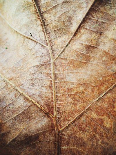 Dry leaf Dry