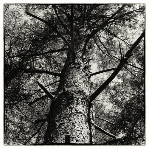 Hanging Out Nature Blackandwhite Trees