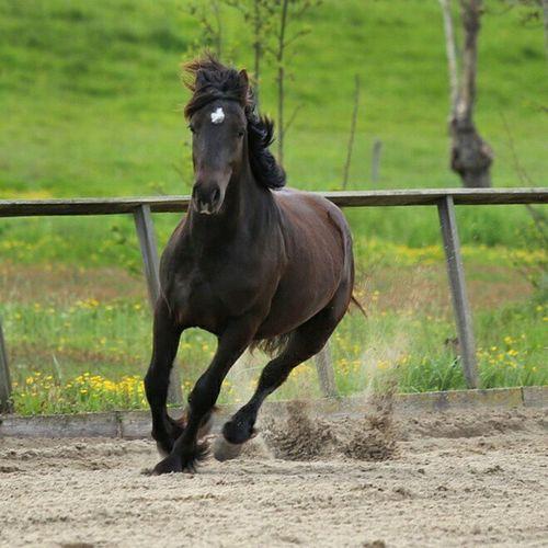 Horse power Horses Horse Wild Power Pk Paard Instapicoftheday Photograph Photographer Netherlands Dutch Holland