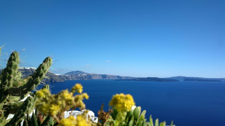 || Nature Theories || Santorini, Greece. TheFoneFanatic Nokia  Nokia808 Vacations Mobilephotography PhonePhotography Nature Seascape Clear Sky Mountain Sea Blue Flower Sky Plant Summer In The City