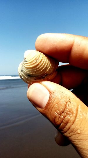 Close-up of hand holding shell at beach against sky