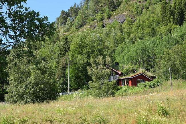 House in the wilds of Norway surounded with forest . House In Nature Green House Surounded By Nature Hytta Weekend House House On A Hill Forest House Camuflage Norway Nature