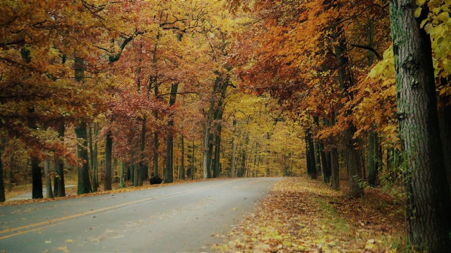 Autumn Change Tree Plant Road Beauty In Nature Direction Tranquility Nature The Way Forward Transportation Growth No People Tranquil Scene Day Orange Color Tree Trunk Trunk Scenics - Nature Land Outdoors Treelined WoodLand Autumn Collection Fall