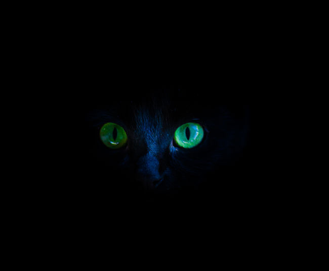 Close-up portrait of black cat in dark