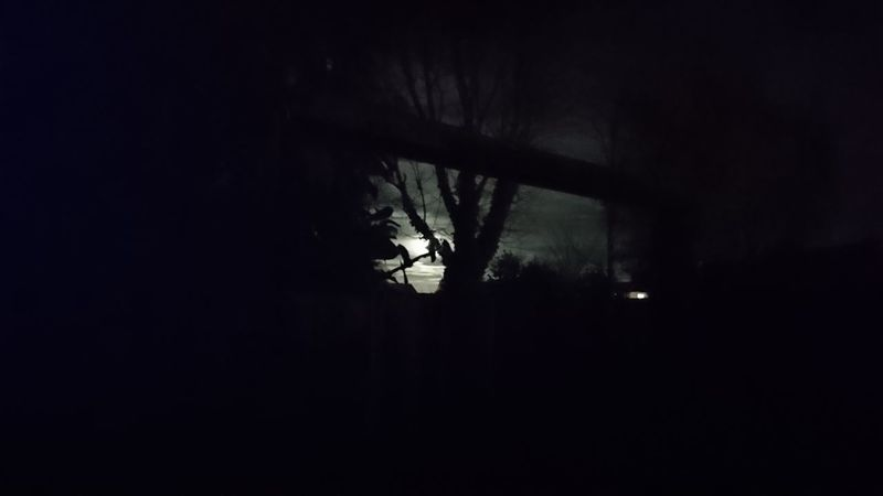 Silhouette Dark Tree No People Sky Nature Nightsky Stars Trees Wintermoon Moonrise Nature