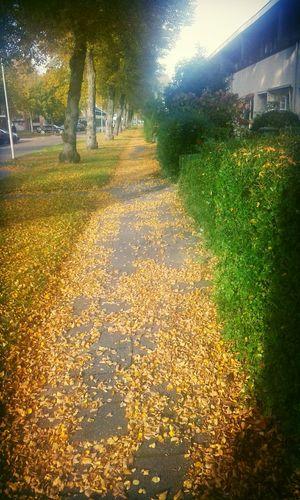 Endless street.. Tree Nature Outdoors Beauty In Nature Sneek Dutch Sunset Sun Weather Street