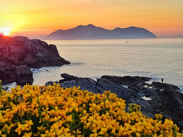 Puestadesol Atardecer Sonabia Cantabria SPAIN Sunset Landscape Beauty In Nature Flower Travel Destinations Mountain Range EyEmNewHere Horizon Over Water Movilgrafias Sunlight Tranquil Scene Yellow Sky Paint The Town Yellow