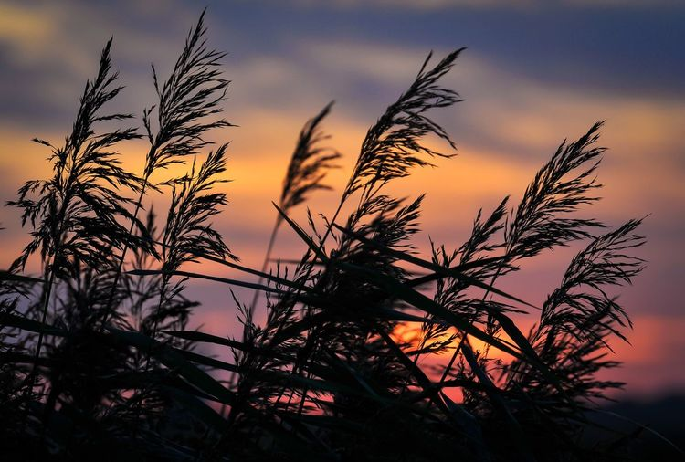 Sun🍁 Sky Plant Sunset Growth Beauty In Nature Silhouette Tranquility Outdoors No People Nature Sunlight