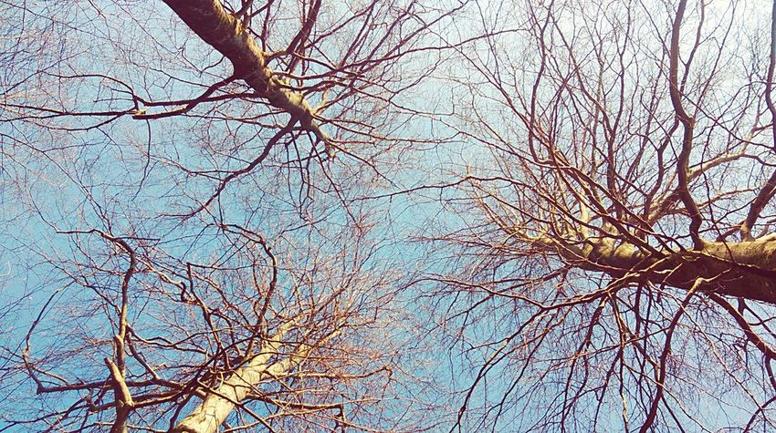 Trees Beauty In Nature Sky