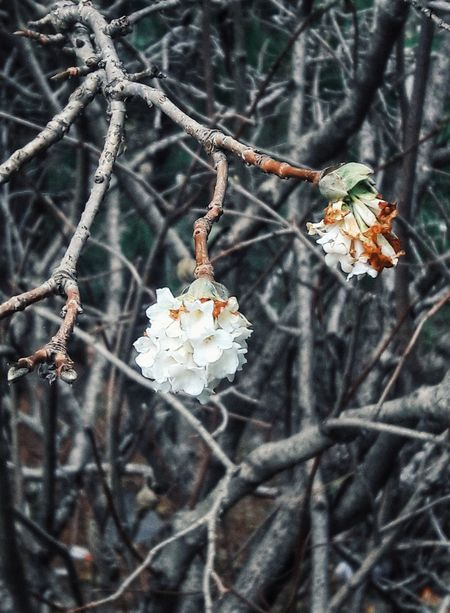 Blooming White Nature Patterns Winter Nature Cold Temperature Tree Snow No People Beauty In Nature Close-up Outdoors Flower Freshness Fragility Growth