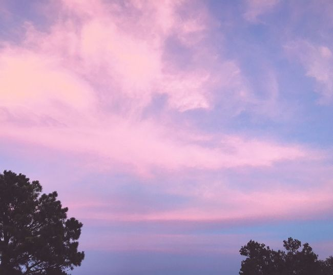Pink Sky Dramatic Sky Texas Texas Skies Tree Sky Low Angle View Scenics Cloud - Sky Silhouette Beauty In Nature Cloud Tranquility Sunset Growth Nature High Section Treetop Majestic Branch Backgrounds Atmospheric Mood Photooftheday Iphoneonly Outdoors Millennial Pink