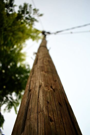 Low angle view of tree trunk against sky