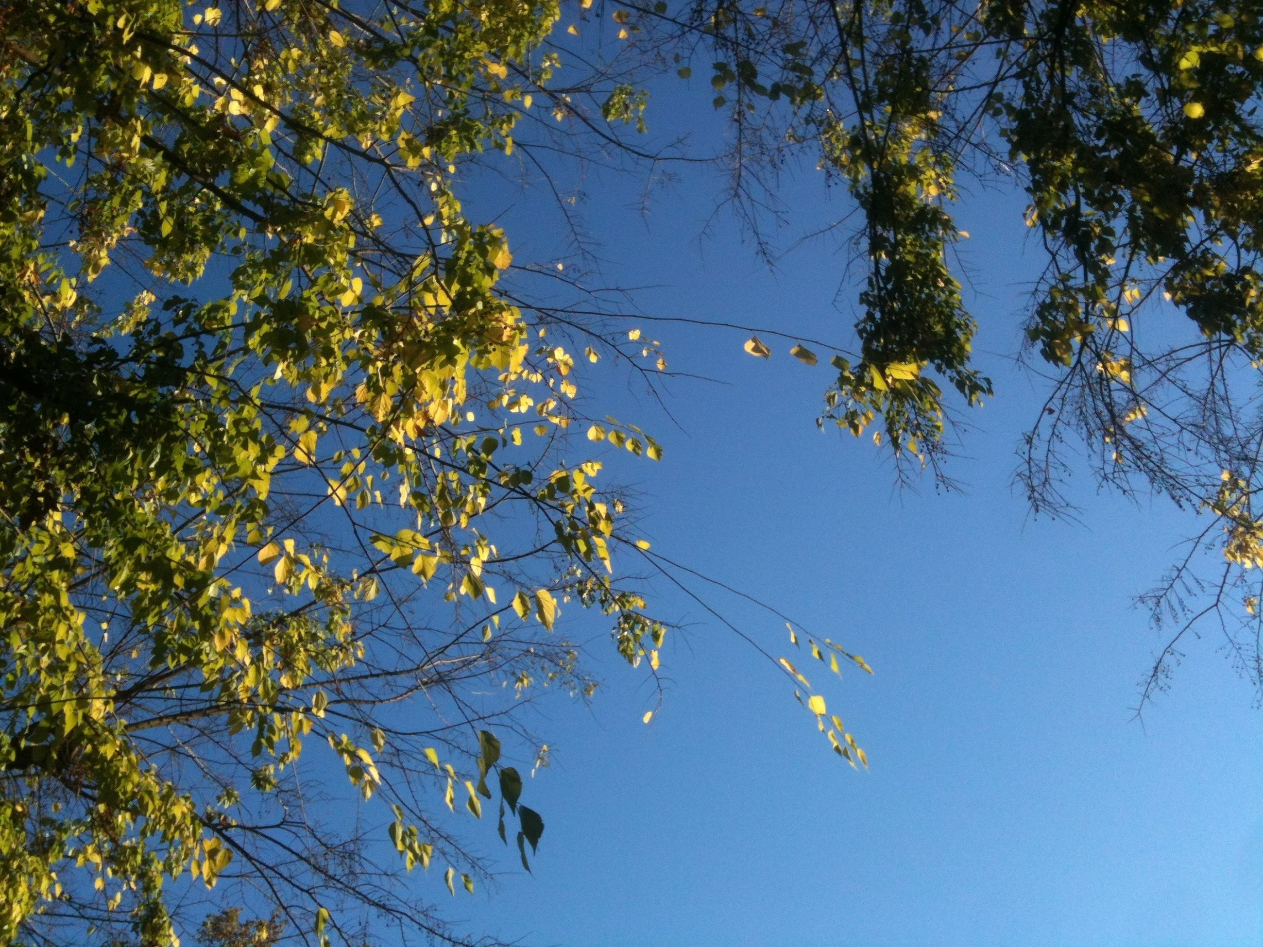 tree, branch, low angle view, blue, clear sky, growth, nature, beauty in nature, tranquility, leaf, sky, day, outdoors, scenics, no people, flying, tranquil scene, sunlight, silhouette, twig