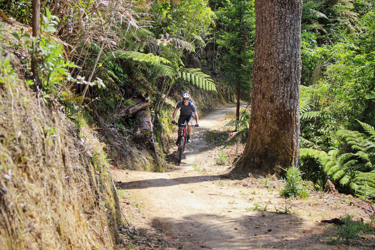 Rear view of man cycling on road amidst trees in forest