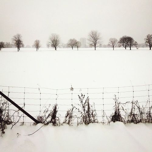 Trees in the distance, CentralExperimentalFarm . Ottawa Igersottawa snow winter vscocam