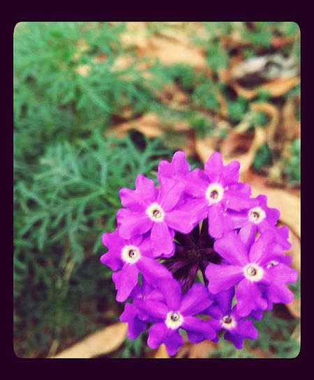 I Foto Small Flowers I Foto It Abha I Foto It