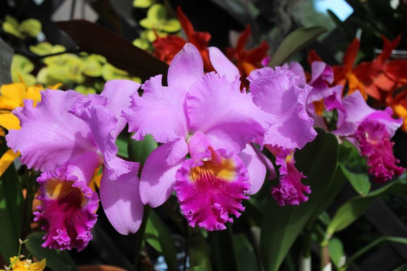 Things I Like To Look At Whenever I Can! What's More Beautiful Than Springtime Orchid?