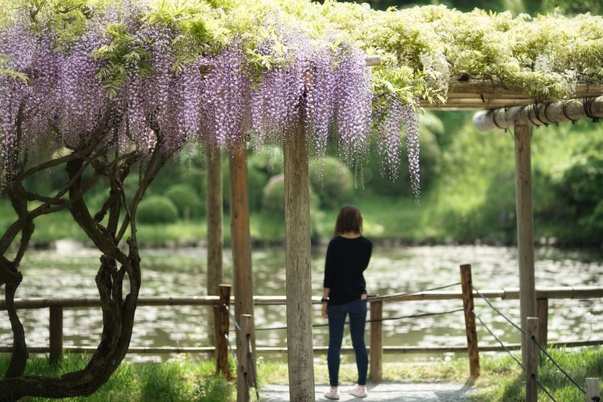 Capture The Moment Beauty In Nature Only Women Silhouette Rear View Depth Of Field Wisteria Flowers Outdoors Nature People Uzuki Of The Flower Uzu St. Snapshots Of Life Fine Art Fantasy Shine Bright Water Reflections Fantastic Landscapes Full Frame Detail Sigma SONY A7ii 17_05 The Street Photographer - 2017 EyeEm Awards The Great Outdoors - 2017 EyeEm Awards The Portraitist - 2017 EyeEm Awards EyeEmNewHere Neighborhood Map