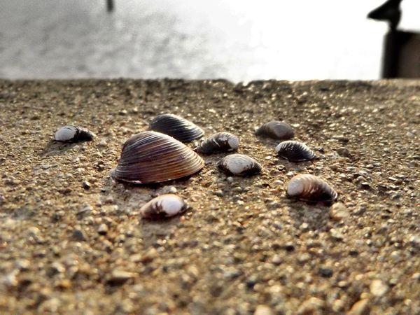 Seashells, Sand And Water Grass Lake Nature Grass Lake Michigan Lake View Sea Shells