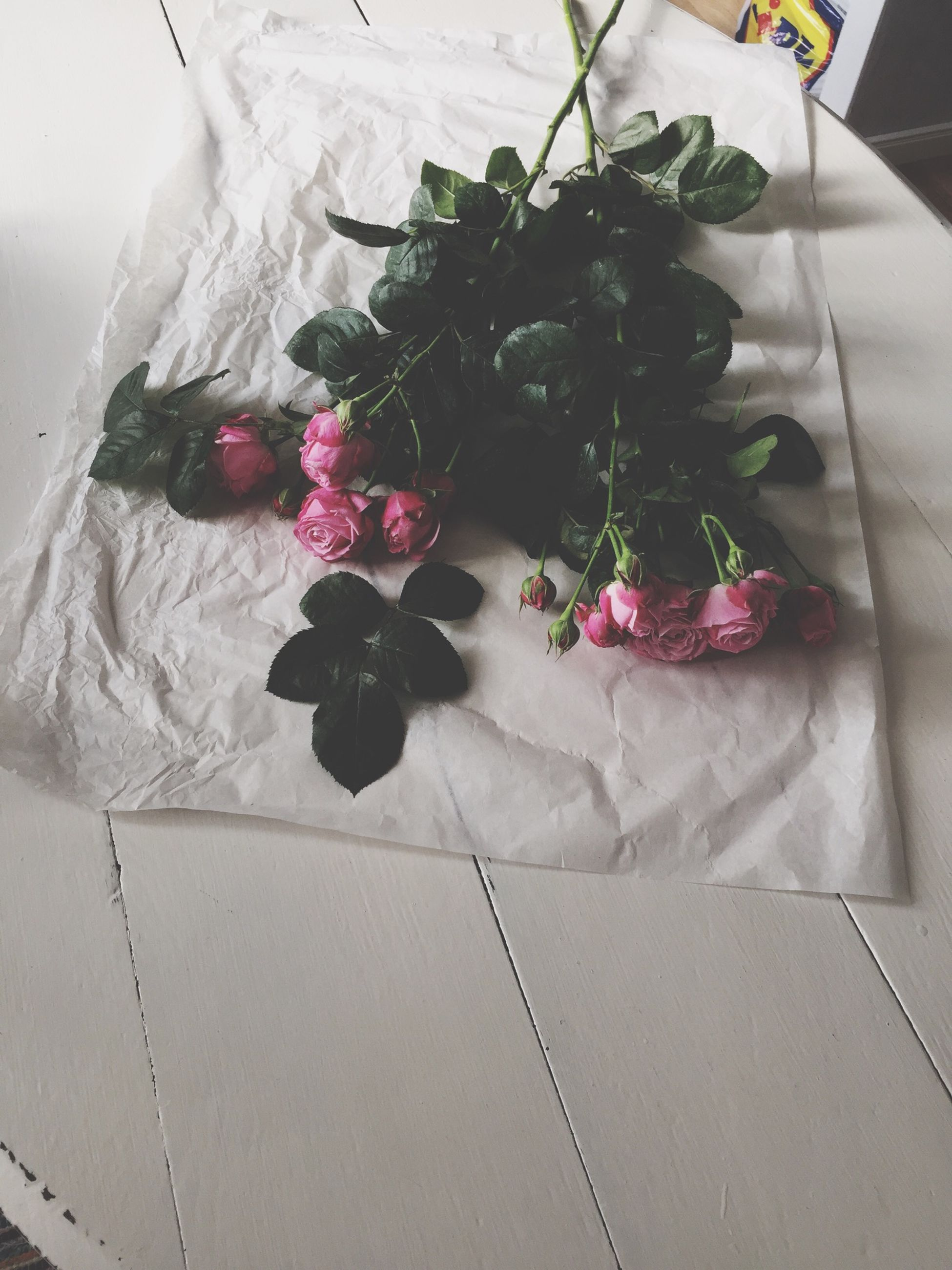 flower, indoors, high angle view, plant, potted plant, decoration, wall - building feature, growth, day, no people, rose - flower, hanging, nature, freshness, sunlight, fragility, close-up, shadow, white color