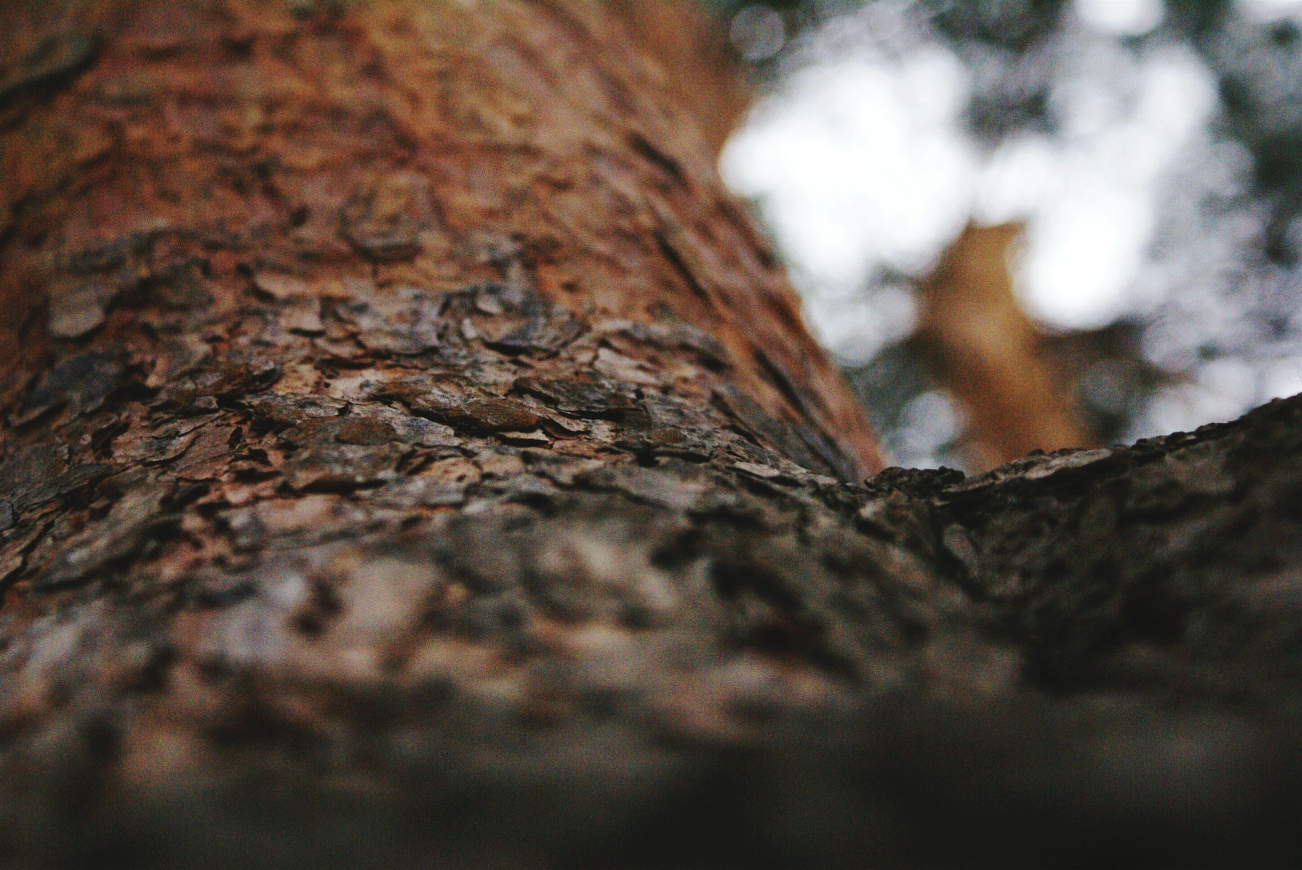 close-up, textured, selective focus, focus on foreground, low angle view, tree, wood - material, rough, pattern, tree trunk, outdoors, day, nature, no people, sky, part of, brown, bark, old, detail