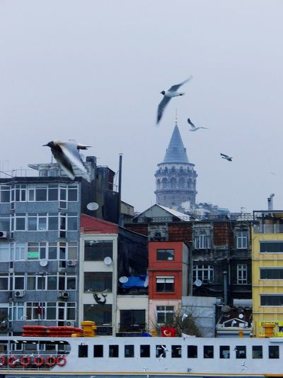Flying Architecture City Built Structure Building Exterior Modern Travel Destinations No People Bird Outdoors Day Animal Themes Sky Skyscraper Antenna - Aerial Cityscape Clock Minute Hand , Istanbul Turkey