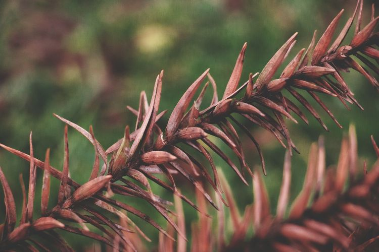 Nature Green Green Color Rural Scene Rural Flower Close-up Plant Pine Cone Needle - Plant Part Pine Tree Spiky Plant Life Pinaceae Pine Woodland Coniferous Tree