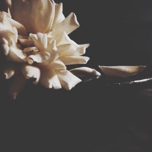 Creme Caramel Roseporn Petals