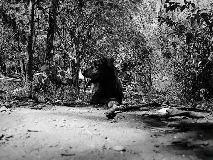 therre is justArtWork Tree Nature Beauty In Nature Outdoors Love Photography Dog Blackandwhite Animals Nature Animal Themes Day something so aluring about this photo Art