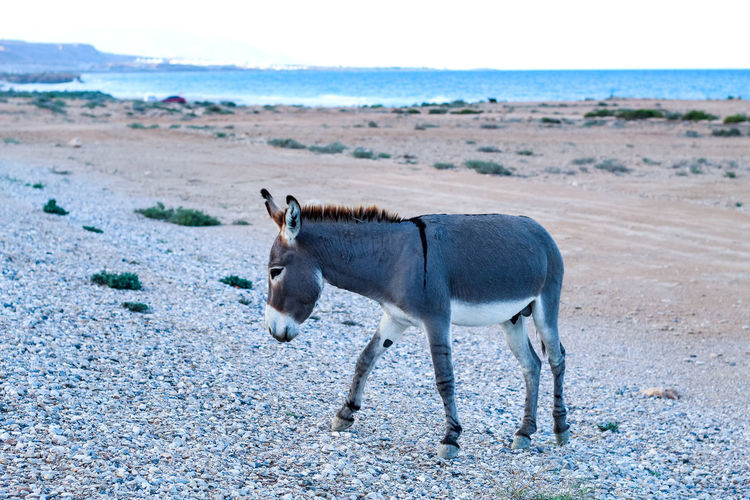 Side view of a horse on beach