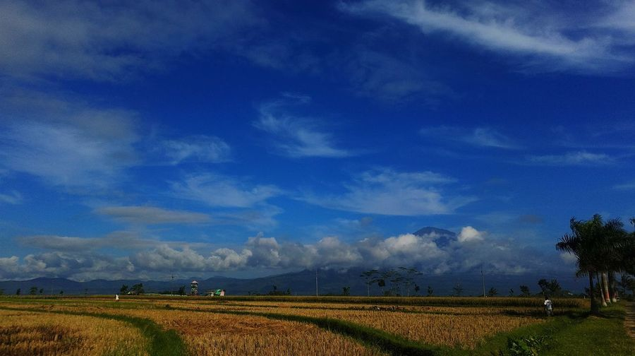 cloud, sky, mountain and rice field Mountain Landscape Tree Rural Scene Agriculture Blue Field Irrigation Equipment Dramatic Sky Sky Landscape Cloud - Sky Farmland Plantation Agricultural Field Terraced Field Rice - Cereal Plant Satoyama - Scenery Asian Style Conical Hat Cultivated Land Crop  Combine Harvester Bale  Laos Ho Chi Minh City Tea Crop Vineyard Farm Rice Paddy