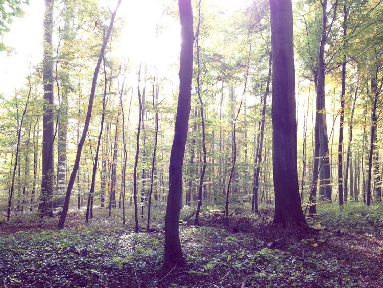 Im Wald. Tree Forest Nature WoodLand Tranquility Beauty In Nature Outdoors No People Wonderful Day Autumn Sun Autumn Sunlight Fall Herbst Sun Shining Through The Trees Special Moment Stadtwald  Frankfurt
