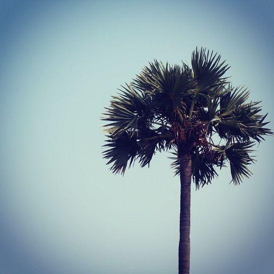 Visakhapatnam Vizag Palm Sky Beach Sunny -day Humidity