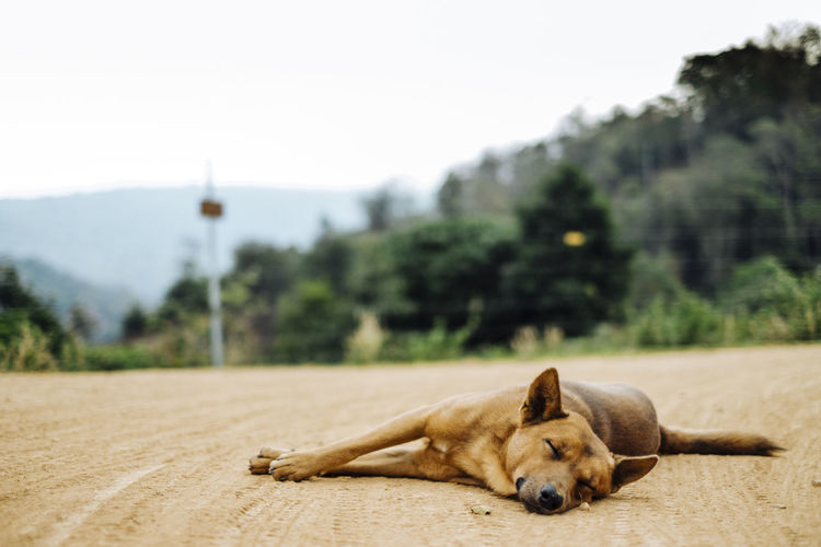 Close-up of dog sleeping on road