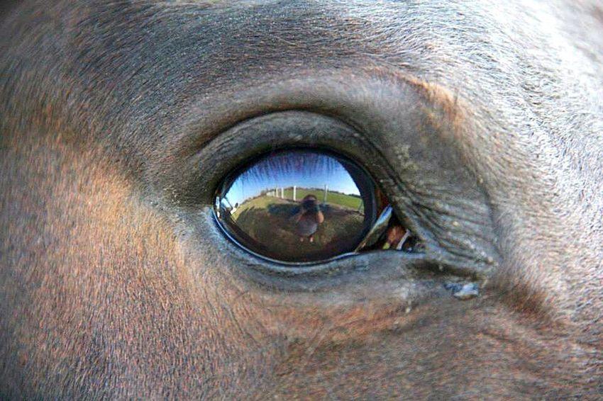 Reflection Reflections EyeEm Best Shots - Reflections Eye Reflections Eyes Horses Horse <3 Horseeye I Love Horses Animals