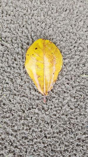 Yellow leaf on beach sand Sand Beach Patterns Close-up Yellow