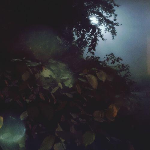 Shadows and fog. Fog In The Trees Autumn Spooky Atmosphere Creative Shots