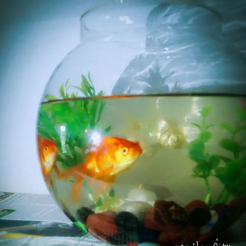 Fish Bowl Biologylab Teaching Thanx To The Friend For D Fish Selfie City Cam Reflection@ Ksaems My Work Place