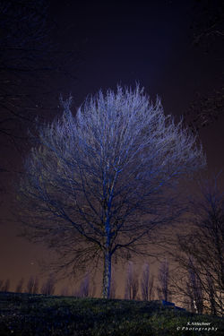 Magic - Beauty In Nature EyeEm EyeEm Gallery EyeEm Nature Lover Germany Landscape Long Exposure Magic Nature Night Night Lights Nightphotography No People NRW Outdoors Photography Single Tree Tree Welcome To Black