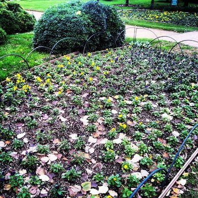 Yeşillik Nezahatgökyiğitbotanikbahçesi