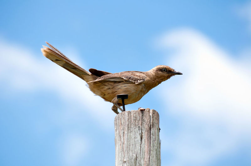 Close-up of bird perching on wooden post against sky